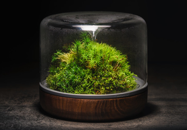 170202 Sanctuary Mossarium
