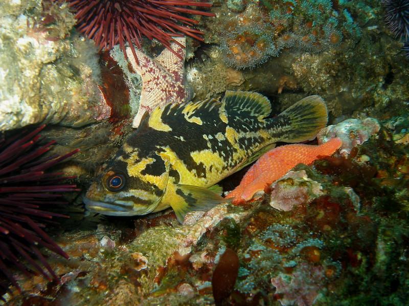 Eyeballing me from Naples Reef, CA