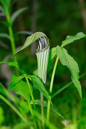 Endangered Plants and Species of Special Concern