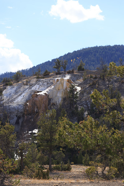 Mammoth Hot Springs 010