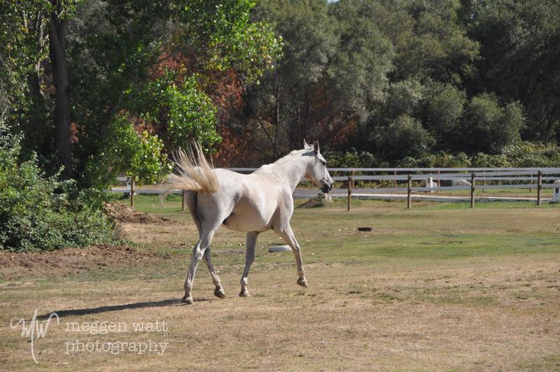 EB&Horses-116.jpg