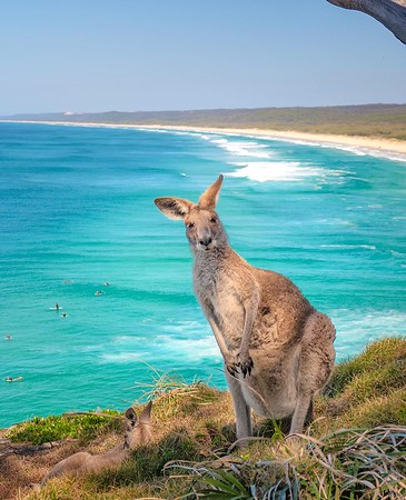5 of the best places to see kangaroos and wallabies on the beach in Australia