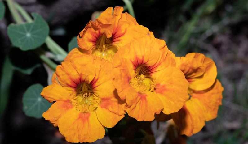 orange-9744.jpg