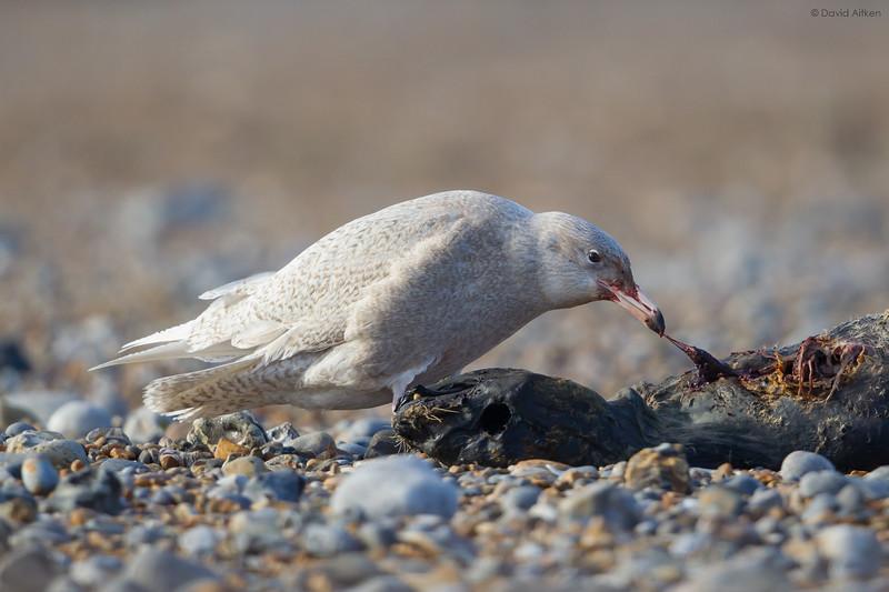 Uncommon and common birds in Britain