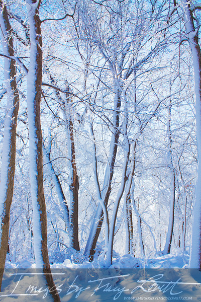 snow_3297 copy.jpg