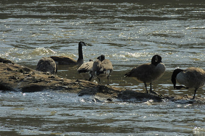 Cochran Soals, Chattahoocchee River Park