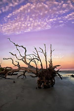 Driftwood Beach, Jekyll Island GA