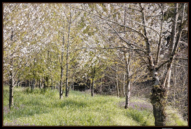Vouga - 29-03-2008 - 5601.jpg