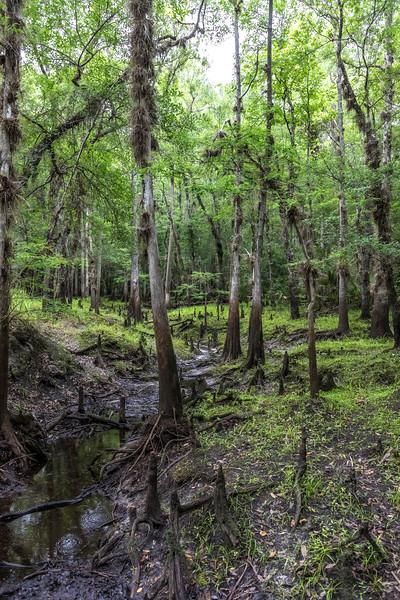 Econlockhatchee floodplain forest