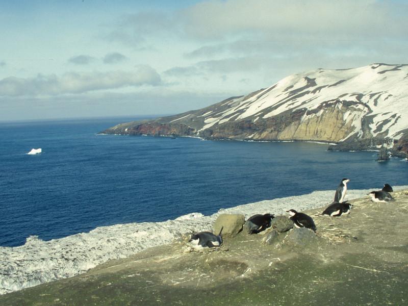 1996593 Chinstrap Penguins Deception Island.jpg