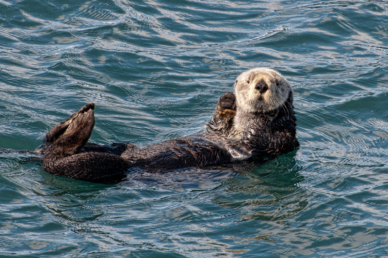 An otter that hangs out near the harbor and says Hi! to boats that pass.