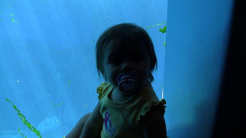 2010_Vancouver_Aquarium_6.mpg