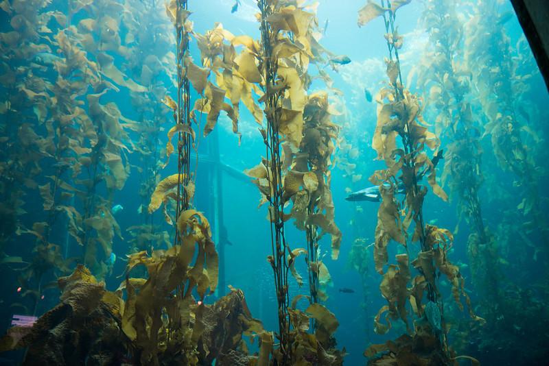 Monterey Bay Aquarium (2012-08-25)
