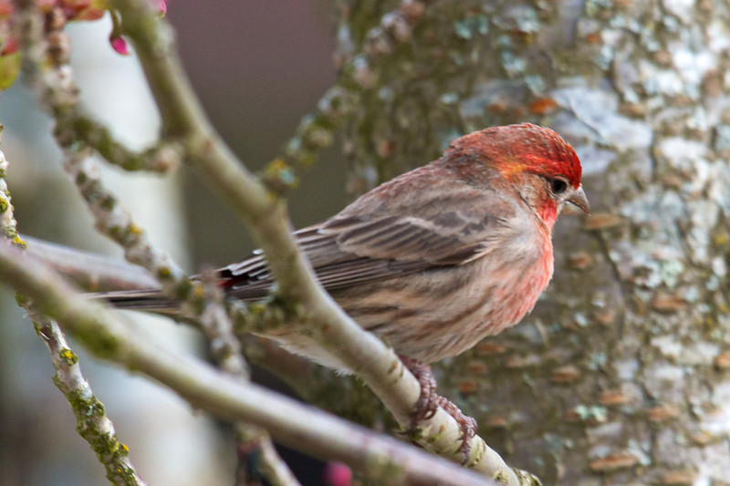 Finch - Up close