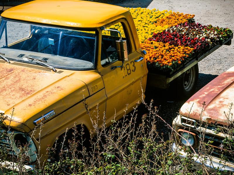 Truck, Pescadero, California, 1996