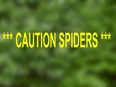 SPIDERS  ***BEWARE***