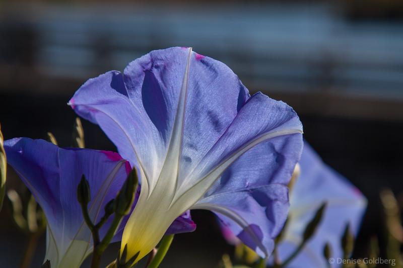 flowers in lavender