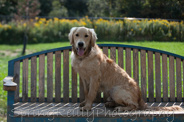 Client Gallery-Axel (Dogs at Camp)