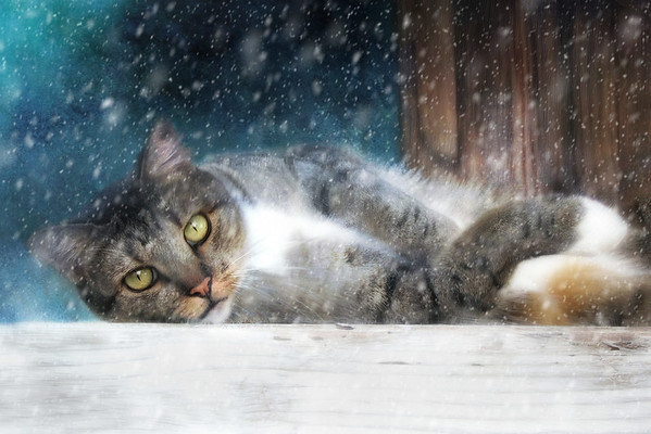 Our Feline Friends Digital Art
