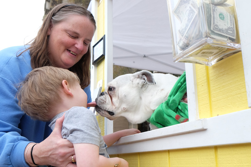 20160312 057 Bulldog kissing booth.JPG