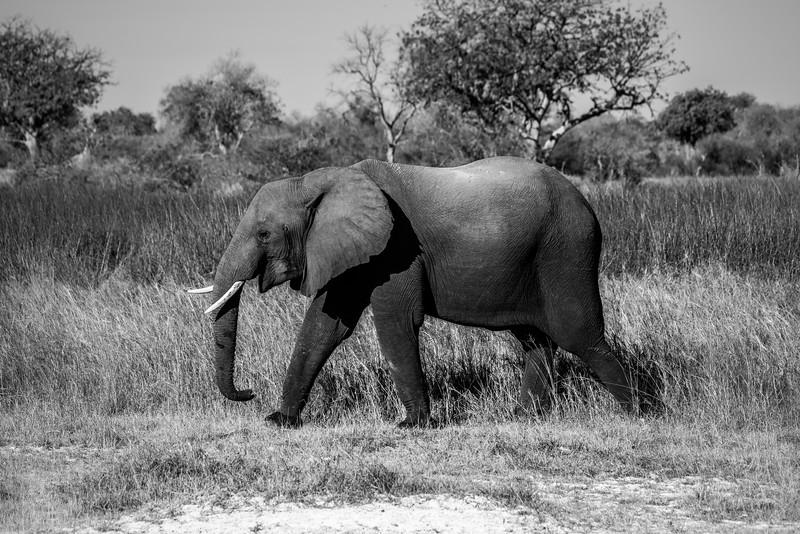 Botswana_June_2017 (714 of 6179).jpg