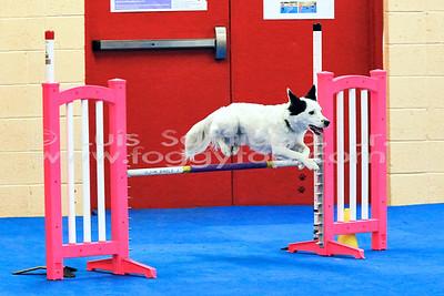 107) Beginner Novice Jumping