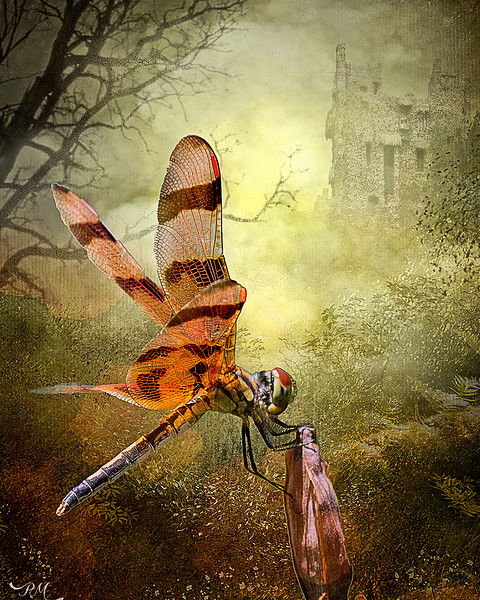 Enchantedforestonone-copy.jpg