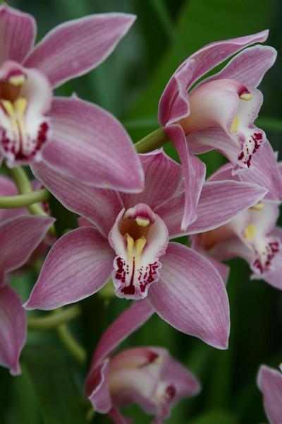orchids 09 185.jpg