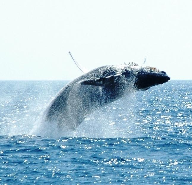 whale back flips.JPG