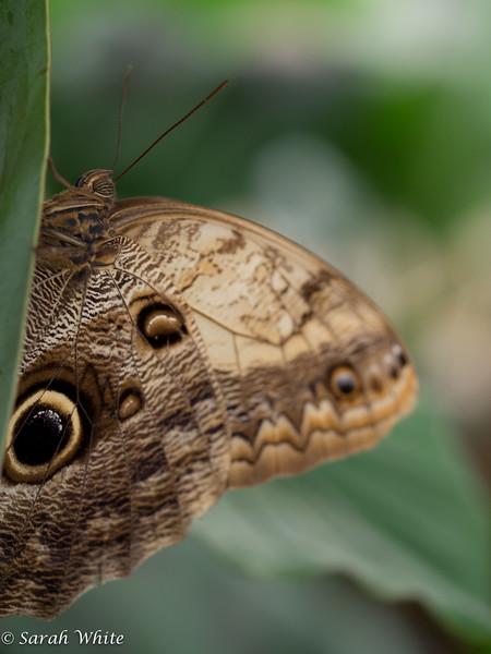 140503_ButterflyHouse_339.jpg