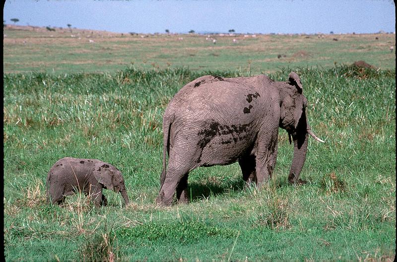 Kenya2_084.jpg