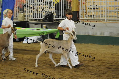 2013 Showmanship Fitting Team