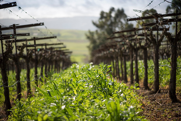 Occasio Winery February 18, 2016