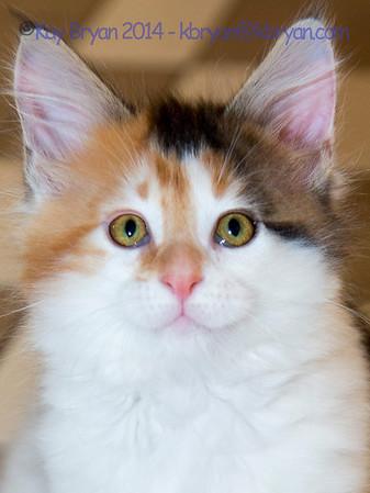 Kittens - Becky Galloway