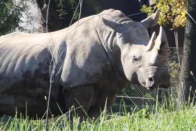 Omaha Zoo: Miscellaneous Mammals