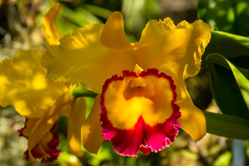naples_botanical_garden_0056-LR.jpg