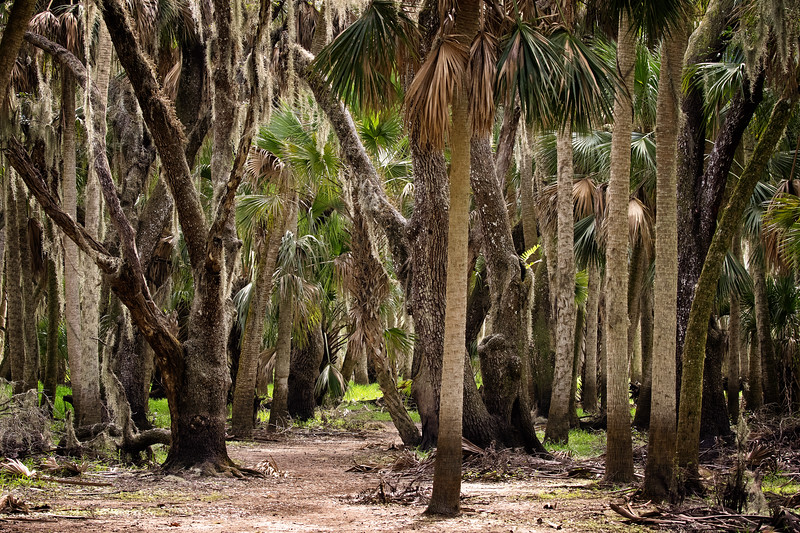 Myakka Forest-3692-Edit.jpg