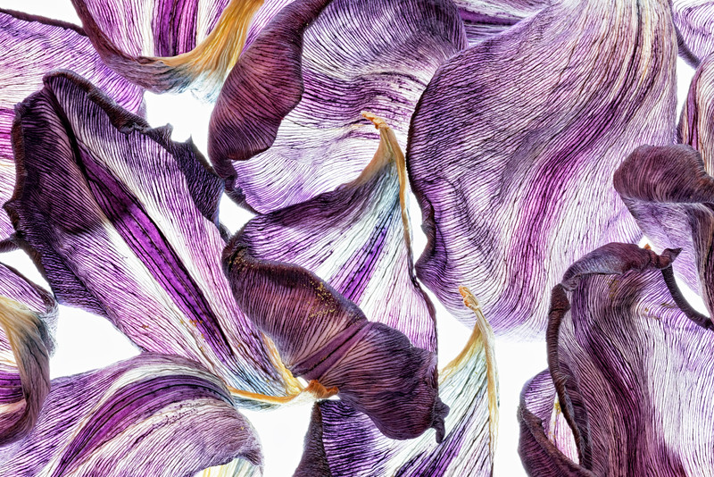 purple-petals.jpg