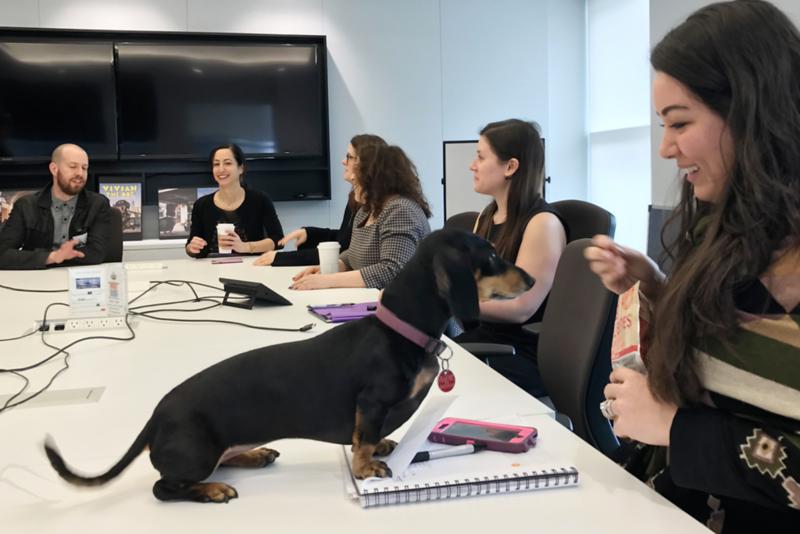 dog at meeting