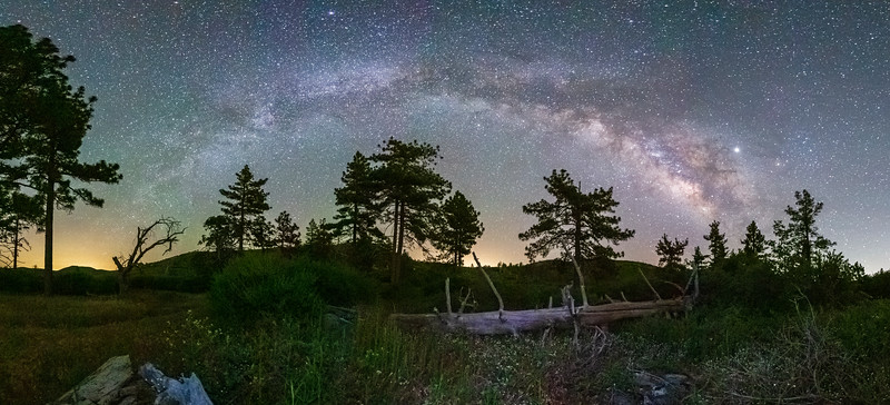Milky Way Galaxy Arch Over Pine Forest In Mount Laguna