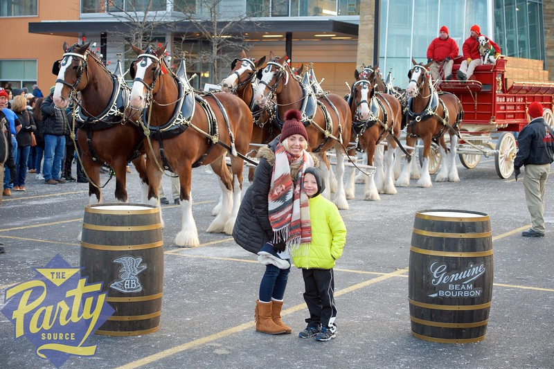 Clydesdale Portraits 282.jpg