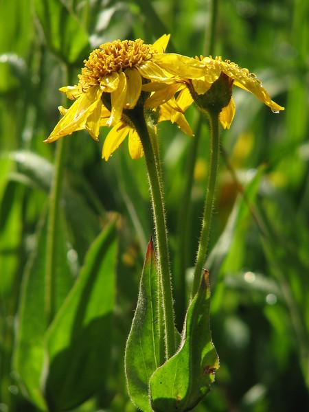 amh FLOWERS (1386).jpg