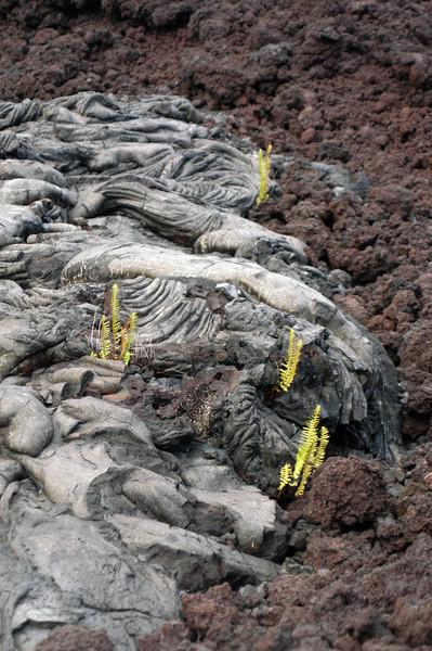 267- 20080412- Hawaii 15- Volcano Nat'l Park DSC_3135.jpg