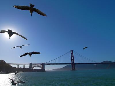 San Francisco (三藩市/舊金山), USA