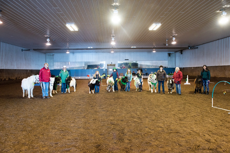 Midwest Miniature Horse and Pony Club