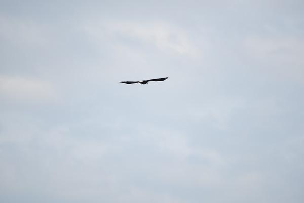 Deck birds 6/4/16