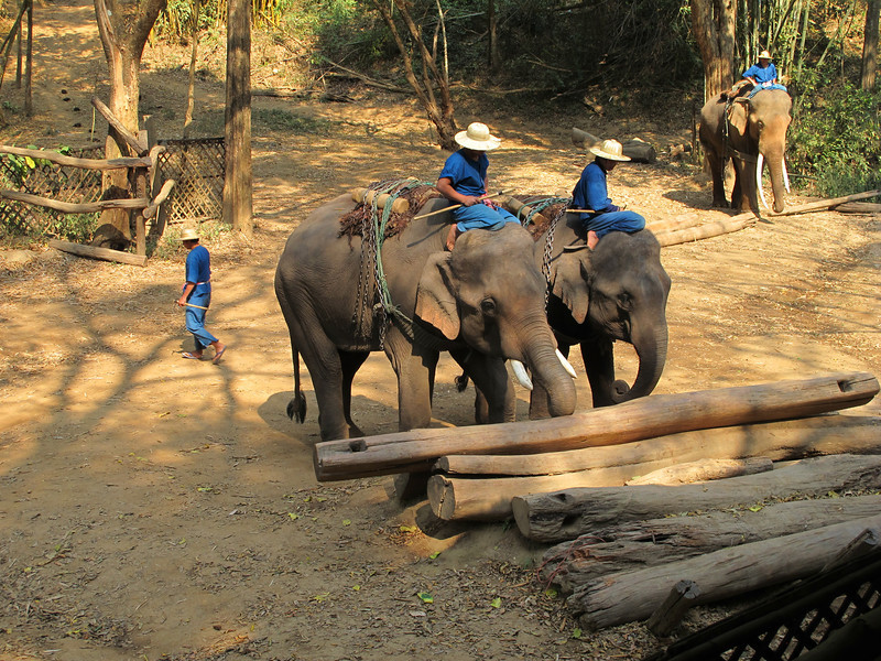 Demonstration of elephants piling timber.