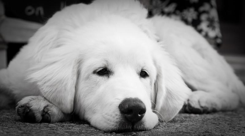 Tired boy.