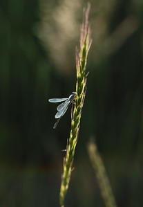 Nature/Wildlife/Landscapes