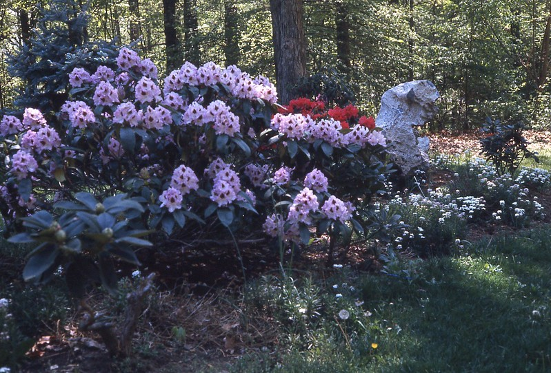 1976 flowers blooming.jpg